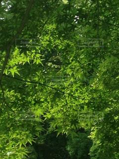 空,森林,屋外,太陽,緑,葉,景色,光,新緑,ハイキング,木洩れ陽
