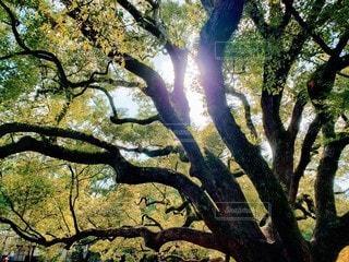 空,秋,木,太陽,木漏れ日,光,快晴