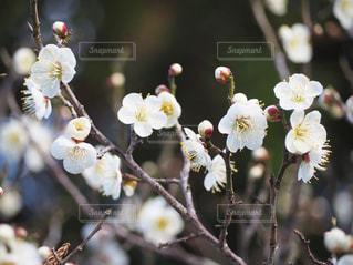 花のクローズアップの写真・画像素材[3021241]