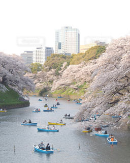 千鳥ヶ淵の桜の写真・画像素材[3042662]