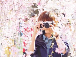 枝垂れ桜と写真を撮る女性の写真・画像素材[3042753]