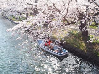 弘前公園の桜とボートの写真・画像素材[3042757]
