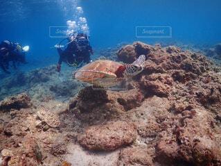 ダイビング中に会ったウミガメの写真・画像素材[4387463]