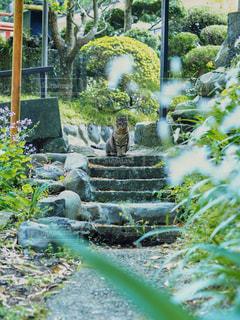 猫の目線の写真・画像素材[2946750]