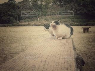 野良猫のあくびの写真・画像素材[2906989]