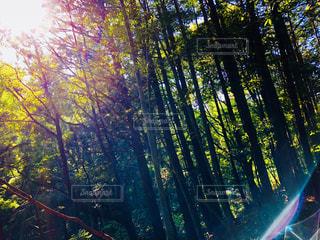 自然,空,森林,屋外,太陽,森,緑,林,日光,山,反射,光,樹木,木立,初夏,草木