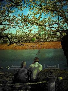桜の写真・画像素材[143584]
