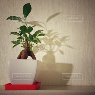 植物の写真・画像素材[205022]