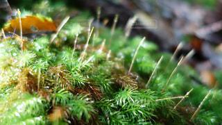 植物の写真・画像素材[453980]