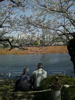 桜 - No.684642