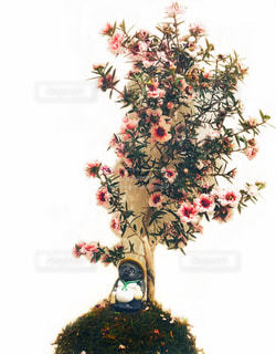 狸の花見の写真・画像素材[1368665]