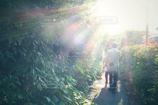 夏の小道の写真・画像素材[1425107]