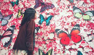 蝶の壁の写真・画像素材[2230043]