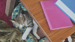猫,動物,本,読書,居眠り,ペット,眠る,人物,睡眠,ネコ