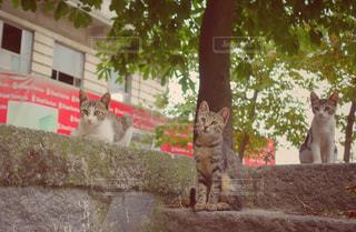 猫,動物,海外,仲良し,ペット,人物,トルコ,イスタンブール,兄弟,仲間,ネコ