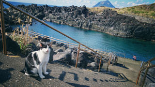 男性,猫,海,動物,海辺,撮影,写真撮影,ペット,人物,八丈島,ネコ