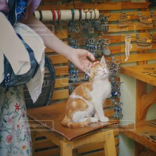 女性,猫,動物,ペット,人物,ネコ,店番