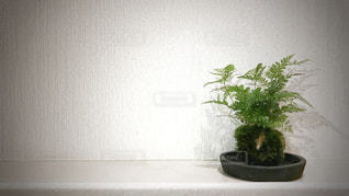 苔玉の写真・画像素材[2988296]