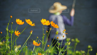 花と釣り人の写真・画像素材[3732975]