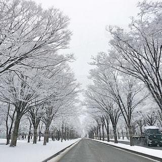 街路樹の雪化粧の写真・画像素材[2841932]