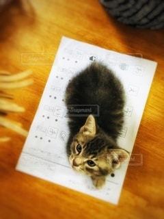 屋内,室内,子猫,勉強,宿題,プリント,自宅,自習,学習,ひらがな,自宅学習