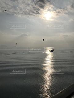 自然,海,空,鳥,屋外,太陽,水面,光,カモメ