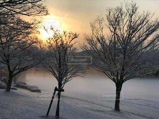 自然,風景,空,冬,雪,屋外,太陽,朝日,霧,光,樹木,冷
