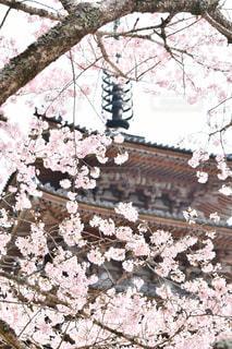 ピンクの花のグループの写真・画像素材[3078949]