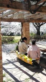 和服でお花見の写真・画像素材[3076767]