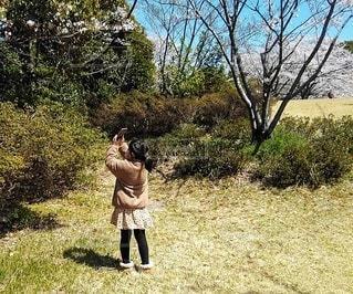 桜をスマホで撮影する女の子の写真・画像素材[3079005]