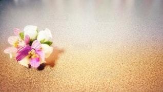 花とグラデーションスペースの写真・画像素材[3022136]