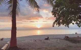 犬,自然,海,空,動物,太陽,ビーチ,雲,砂浜,夕暮れ,水面,海岸,光,樹木,ヤシの木,夕陽,リゾート,草木,パーム