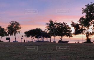 自然,風景,海,空,屋外,太陽,ビーチ,夕焼け,夕暮れ,光,樹木,ヤシの木,日の出,リゾート,草木,クラウド