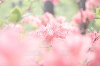 近くの花のアップの写真・画像素材[1134582]