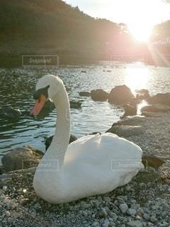 空,夕日,太陽,光,白鳥