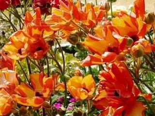 色とりどりの花の写真・画像素材[3040576]