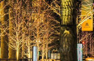 夜,夜景,街,光,樹木,イルミネーション,都会,梅田,アンバサダー,グランフロント大阪,ウメキタ,シャンパンゴールド