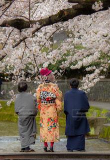 女性,男性,家族,3人,風景,花,春,桜,屋外,サクラ,満開,着物,人,染井吉野,キモノ