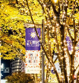 冬,屋外,樹木,イルミネーション,都会,クリスマス,梅田,明るい,LED,グランフロント大阪,シャンパンゴールド