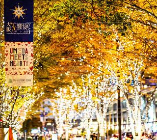 冬,屋外,樹木,イルミネーション,クリスマス,梅田,LED,グランフロント大阪,シャンパンゴールド,グランフロントクリスマス