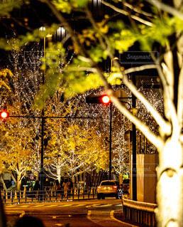 夜,屋外,樹木,イルミネーション,都会,クリスマス,通り,LED,グランフロント大阪,街路灯,シャンパンゴールド,グランフロントクリスマス