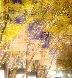 風景,夜,屋外,樹木,都会,クリスマス,照明,装飾,グランフロント大阪,シャンパンゴールド,グランフロントクリスマス