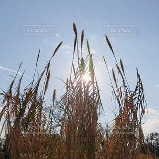 自然,空,太陽,光,日向,草木,冬の空,冬の光