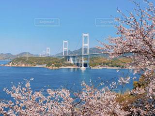 桜と来島海峡大橋の写真・画像素材[3078007]