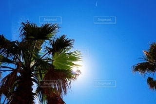 ヤシの木と太陽の写真・画像素材[3343359]