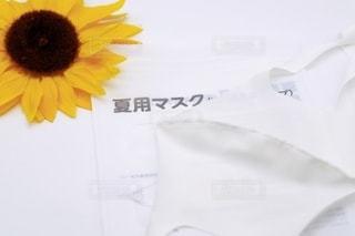 夏用マスクの写真・画像素材[3537164]
