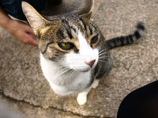 猫,動物,人物,野良猫,ネコ,切れ長の目