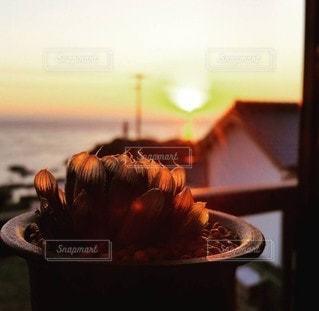 空,太陽,夕焼け,夕暮れ,光,夕陽,多肉植物