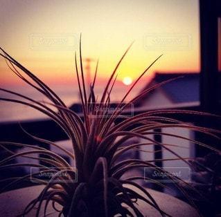 空,太陽,夕焼け,夕暮れ,光,夕陽,エアープランツ