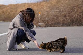女性,20代,猫,動物,ペット,人物,ネコ
